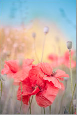 Premium poster Poppies in the summer