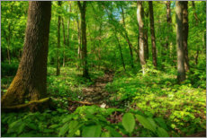 Canvas print  Green forest in the Hainich National Park - Oliver Henze