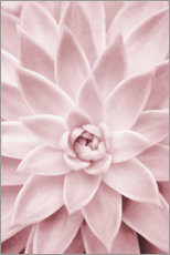 Canvas print  Pink succulent plant - Sisi And Seb