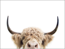 Wall sticker  Cuddly Highland Cattle - Sisi And Seb