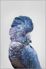 Acrylic print  Blue parrot - Sisi And Seb