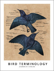 Premium poster Bird teminology