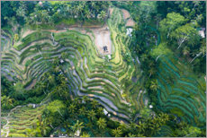Gallery print  Rice terraces of Bali - Matteo Colombo