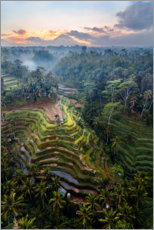Gallery print  Rice fields and volcano, Bali - Matteo Colombo