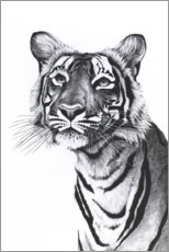 Canvas print  Tiger portrait - Rose Corcoran