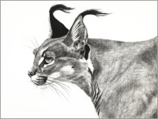 Premium poster Caracal in the wind