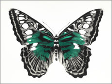 Acrylic print  Green butterfly - Rose Corcoran