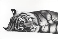 Premium poster  Sleeping tiger - Rose Corcoran