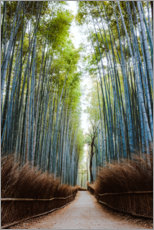 Canvas print  Bamboo forest in Kyoto - Matteo Colombo