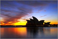 Wall sticker  Sydney Opera House in the evening light - David Wall