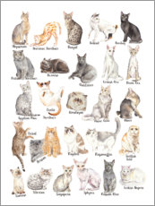 Foam board print  Cat Breeds - Wandering Laur