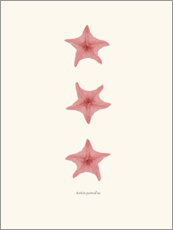 Wall sticker  Pink starfish - Patruschka