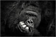 Acrylic print  Portrait of a gorilla - Antje Wenner-Braun