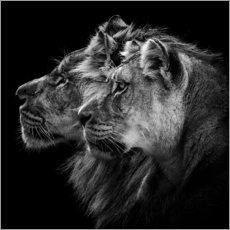 Premium poster  Portrait of a Lion and a Lioness - Laurent Lothare Dambreville