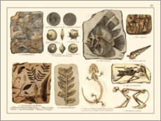 Premium poster  Fossils I (german) - Wunderkammer Collection
