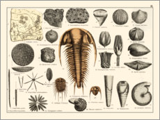 Premium poster  Fossils II - Wunderkammer Collection