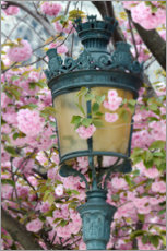Premium poster  Lantern with cherry blossoms in Paris - Carina Okula