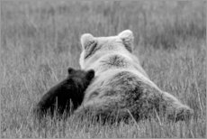 Canvas print  Grizzly bear mom with child - Brenda Tharp