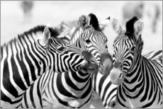 Canvas print  Three zebras - Jaynes Gallery