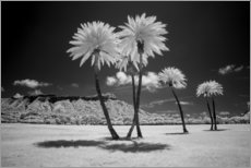Premium poster  Infrared palm trees - Peter Hawkins