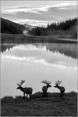 Canvas print  Rocky Mountain National Park - Jaynes Gallery