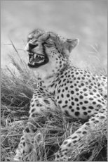 Wood print  Laughing cheetah - Ralph H. Bendjebar