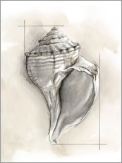 Gallery print  Shell Schematic I - Megan Meagher