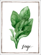 Acrylic print  Herbal illustration sage - Grace Popp