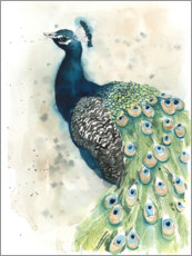 Canvas print  Peacock Portrait - Grace Popp