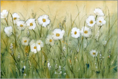 Acrylic print  Daisies in spring I - Tim O'Toole