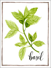 Acrylic print  Herbal illustration Basil - Grace Popp