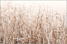 Canvas print  Grasses in the snow - Paivi Vikstrom