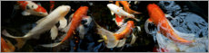 Canvas print  Koi fish in the pond