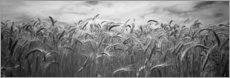 Premium poster  Wheat harvest in Palouse Country
