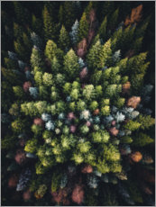 Wall sticker  Colourful conifers from above - Lukas Saalfrank