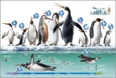 Wall sticker  Living and extinct penguins
