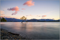 Gallery print  Lonely Tree, New Zealand - Igor Kondler