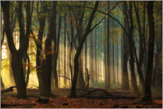 Aluminium print  First light in the forest - Martin Podt