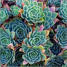 Wall Sticker  Colorful succulents - David Wall