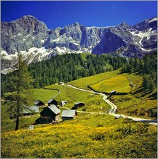 Wall sticker  A pasture in the Dachstein Alps - Ric Ergenbright