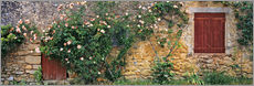 Wall sticker  Climbing roses on old stone wall - Ric Ergenbright
