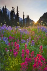 Gallery print  Flower meadow at sunrise - Gary Luhm