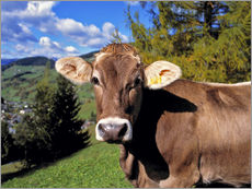 Wall sticker  Startled Swiss cow in the Dolomites - Ric Ergenbright