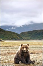 Wall sticker  Grizzly Bear is resting in front of Kinak Bay - Paul Souders