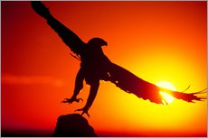 Wall sticker  A golden eagle flies at dawn - Dave Welling