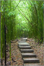 Wall sticker  Wooden path in the bamboo forest - Jim Goldstein