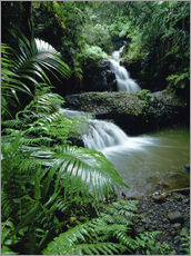 Gallery print  Waterfall in Hawaii - Douglas Peebles
