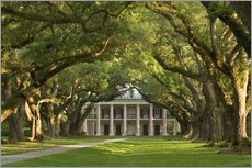Gallery print  Oak Alley Plantation with a canopy of ancient oaks - Wendy Kaveney