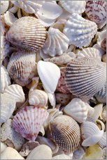 Gallery print  Shells on the beach - Rob Tilley