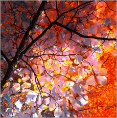 Gallery print  autumn tree I - blackpool